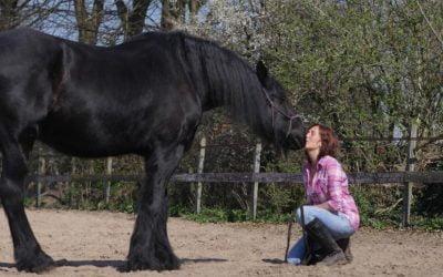 Paardencoaching en Yogadag